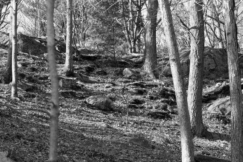A scene in Menotomy Rocks Park.January 19, 2012.