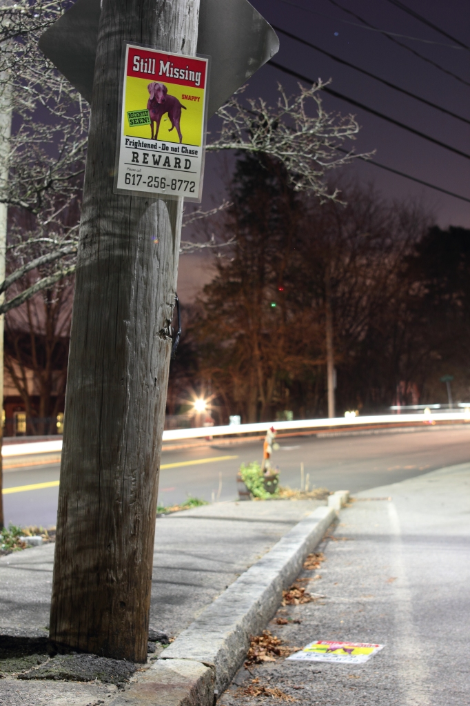Two posters of lost dog Snappy at the intersection of Mystic and Old Mystic Streets.December 23, 2012.
