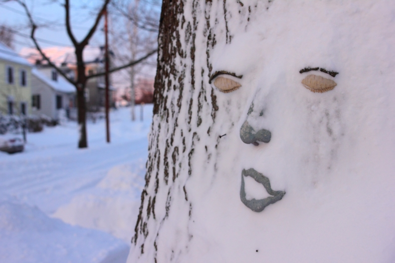 A face on a tree on Chatham Street seemingly shocked by all the snow.February 9, 2013.