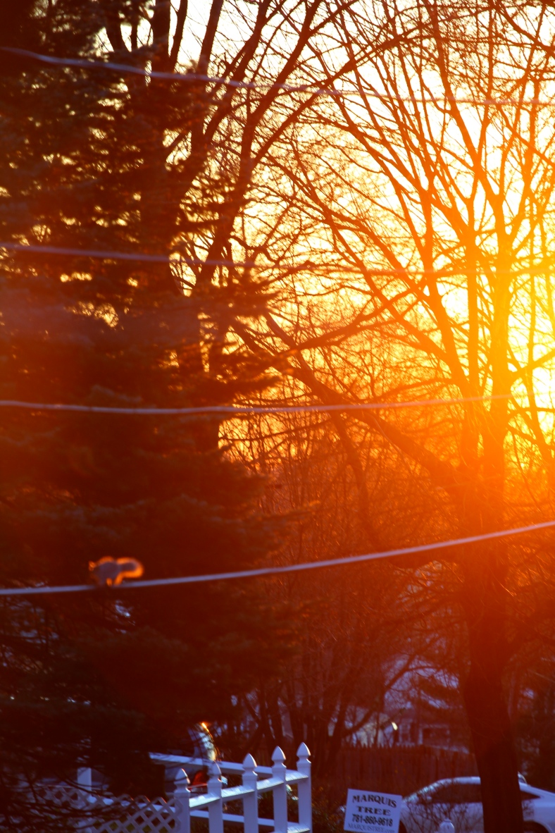 A squirrel runs out of focus on a power line in the morning sun.December 22, 2011.
