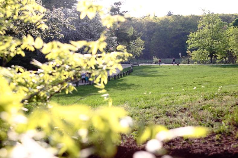 A view of Menotomy Rocks Park from Jason Street. May 10, 2013.