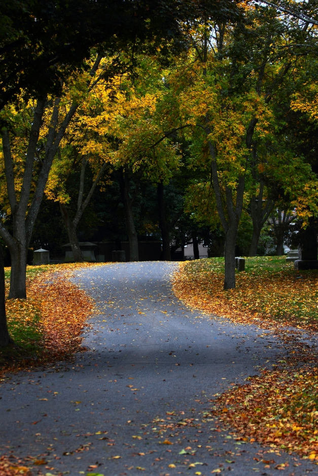 A leaf lined road in Mount Pleasant Cemetery. October 09, 2012.
