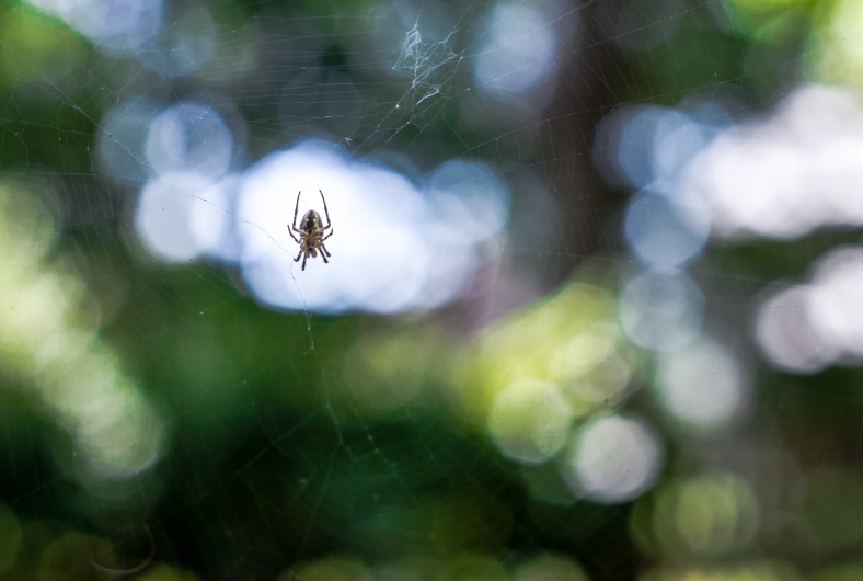 A spider waits for food on a cool summer afternoon. September 4, 2013.