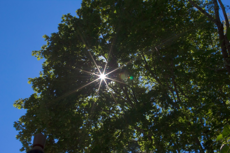 The summer sun shines brightly through Arlington foliage. September 4, 2013.