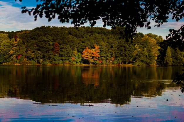 The bright foliage of a tree on the shore of the Lower Mystic Lake. October 3, 2013.