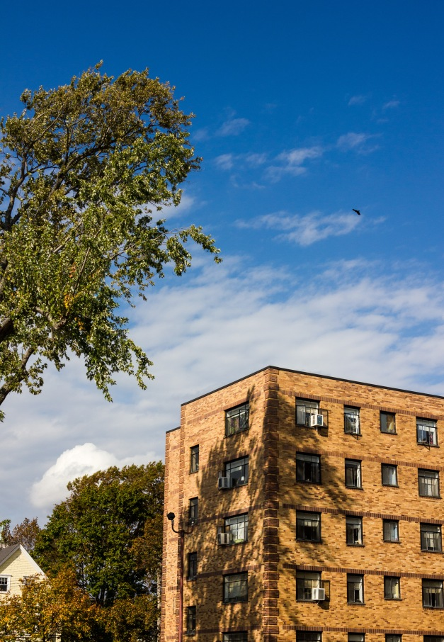 A bird glides over the apartment building at 279 Massachusetts Avenue. October 22, 2013.