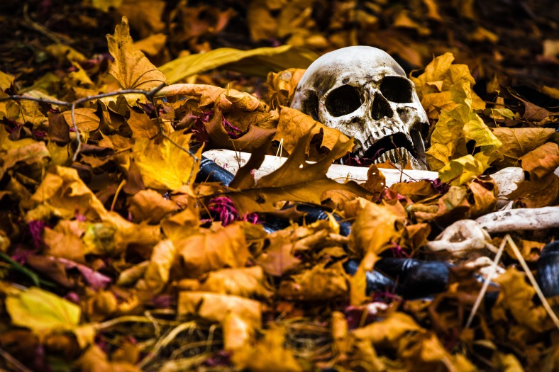 A halloween decoration seemingly drowning in dead leaves on Lansdowne Road. November 15, 2013.