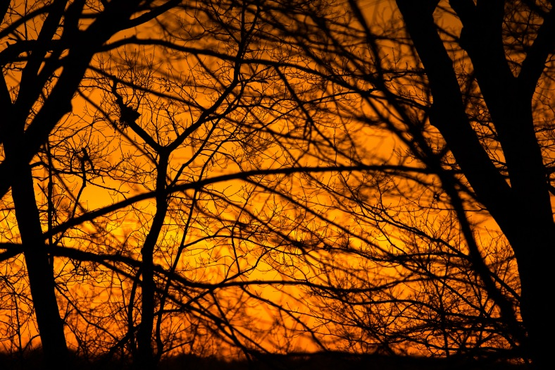 Tree branches silhouetted against a brilliant orate sunset. December 4, 2013.