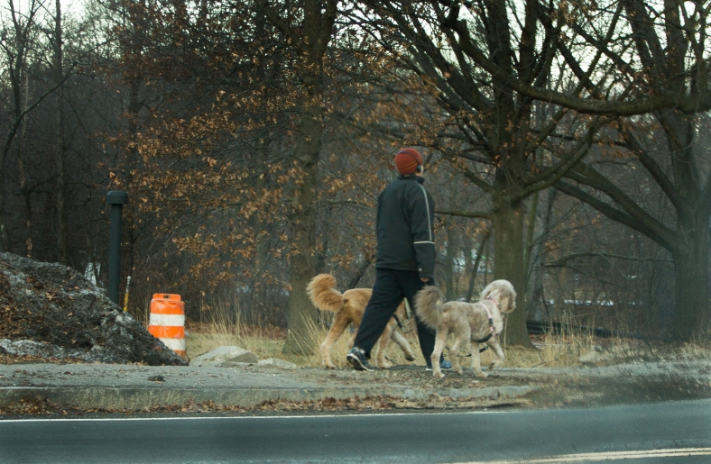 A man walks along Mystic Valley Parkway flanked by two dogs. December 24, 2013.