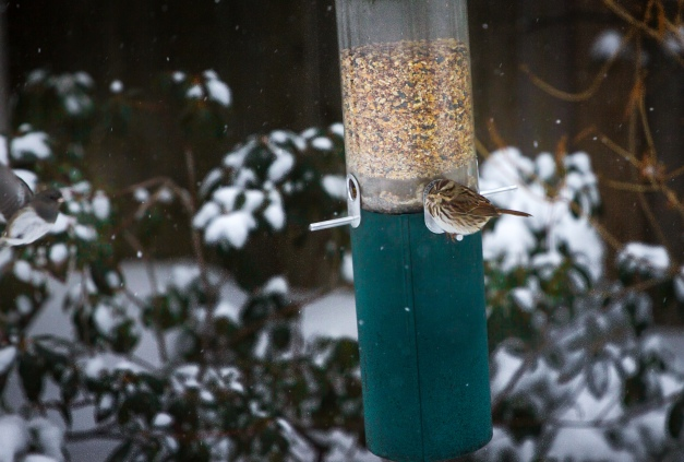 A bird munches on birdseed as another flies over to the feeder during a chilly winter storm. January 2, 2013.