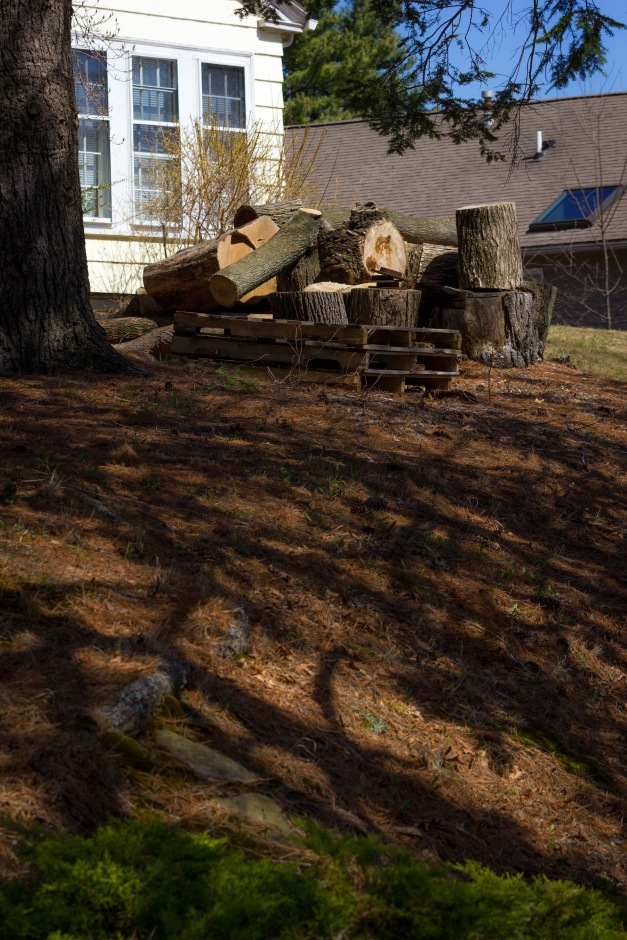 Logs of a fallen tree in the yard of a Hodge Road home. April 12, 2014.