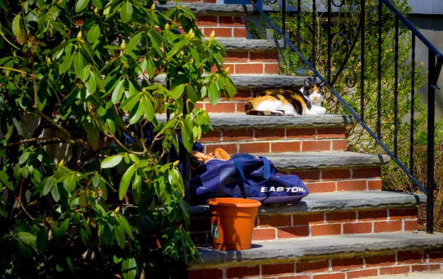 A cat keeps watch over its domain from the front steps of a Fabyan Street home. April 12, 2014.