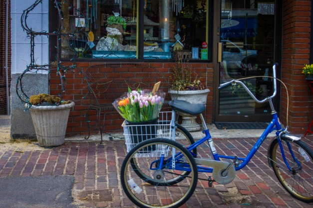 A tricycle carrying a cargo of tulips parked outside Derby Farm Flowers & Gardens on Massachusetts Avenue in Arlington Center. March 28, 2014.