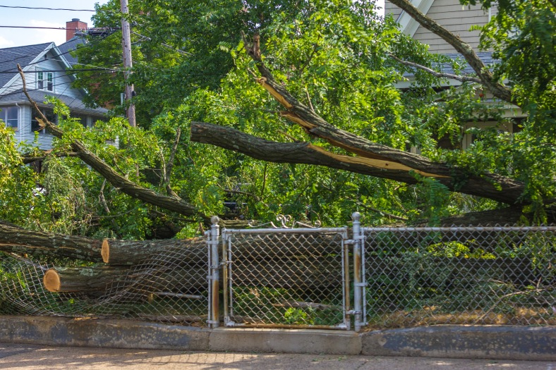 A fallen tree on the front lawn of a Massachysetts Avenue property left by hurricane Arthur over the Fourth of July weekend. July7, 2014.