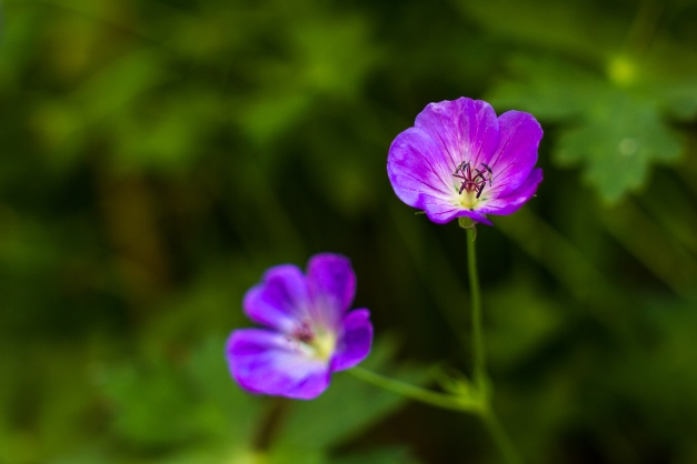Arlington garden flora. July 11, 2014.