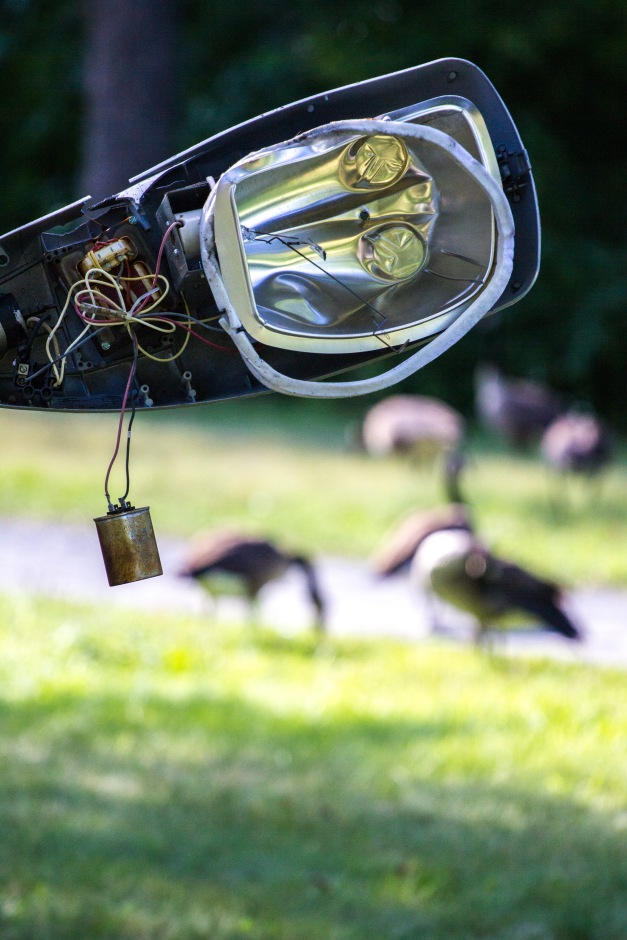 Geese feed in the grass along the Mystic River near a busted streetlight. August 8, 2014.