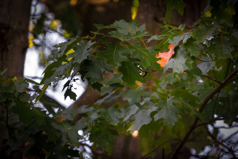 A single leaf signals the imminent transition from summer to fall. September 12, 2014.