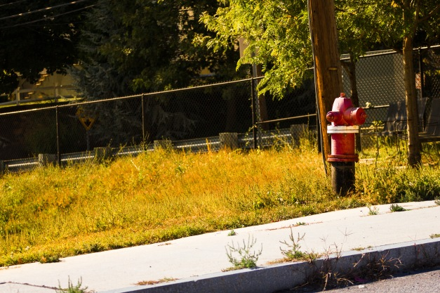 The incline behind the backstop of the baseball field at Summer Street. September 26, 2014.