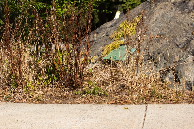 With the coming of fall, Robinson Rock on Gray Street becomes more visible to the passerby.  September 26, 2014.