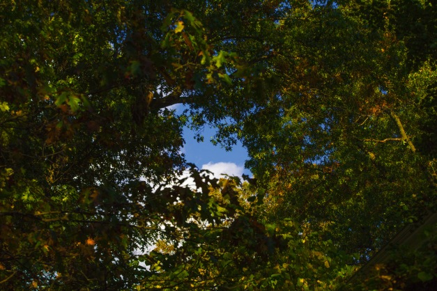 A patch of blue sky visible through fall foliage. October 17, 2014.