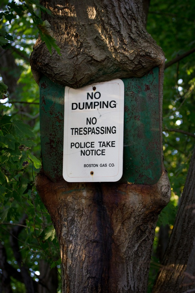 A new sign posted onto an old one—one that has been there so long that the tree it is posted on has started to engulf it. October 17, 2014.