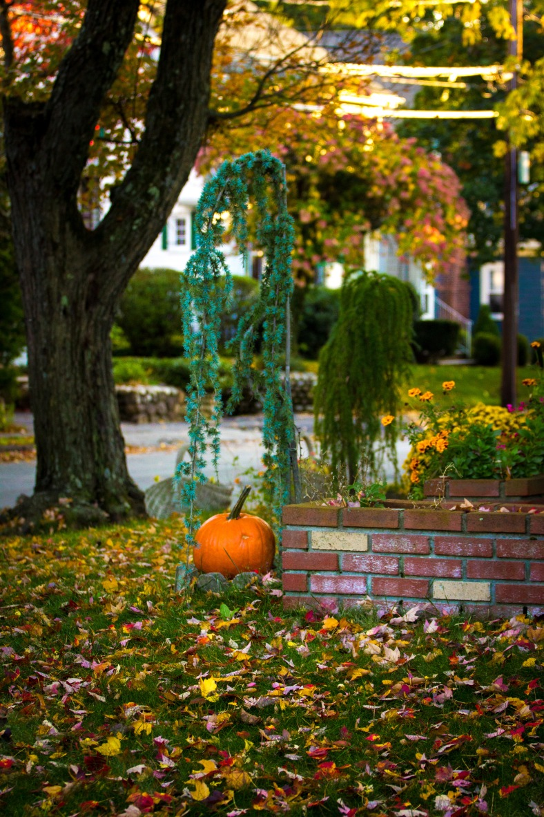 A pumpkin decorating the lawn of an Overlook Road home. October 17, 2014.