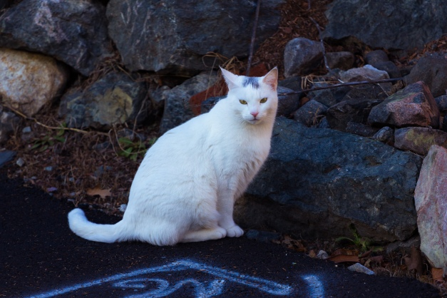 A cat carefully watches approaching visitors to its domain on Crawford Street. December 26, 2014.