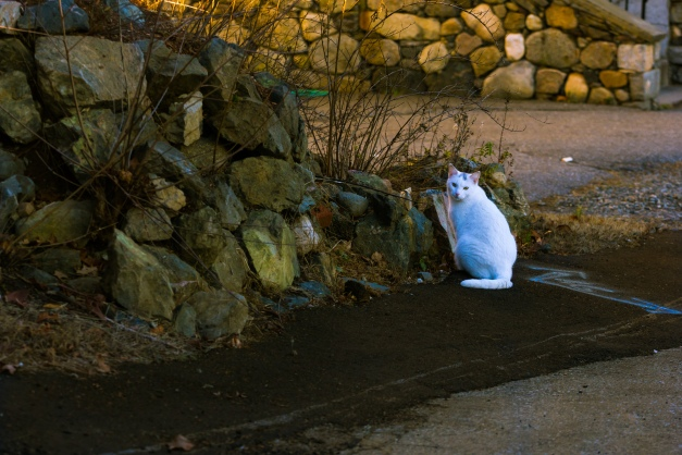 A cat watches as passers by pass by its Crawford Street realm. December 26, 2014.