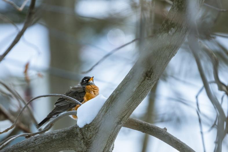 A bird on a snowy branch. January 22, 2014.