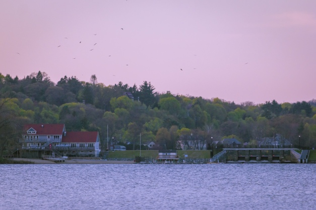 Birds circle the Lower Mystic Lake at sunset. April 28, 2013.