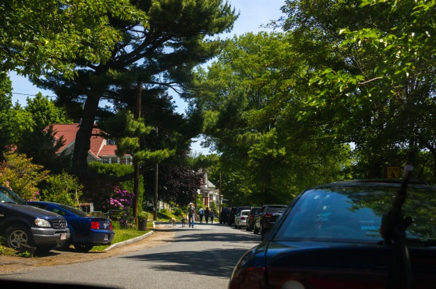 A man walks greyhounds down Lombard Terrace. June 07, 2015. SC