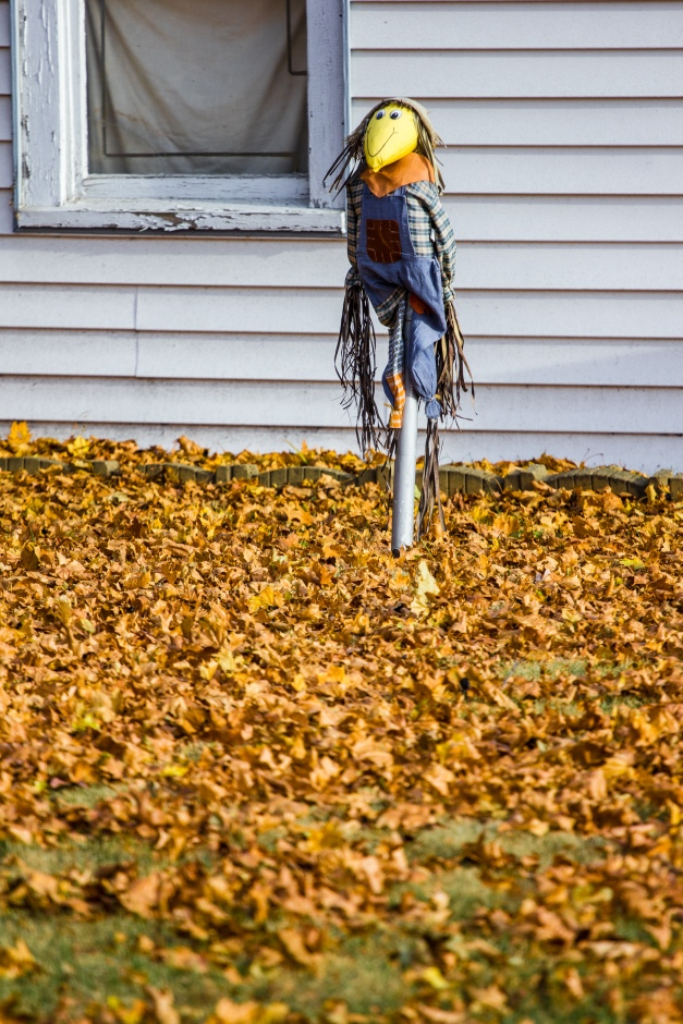 A scarecrow guards precious dead leaves on Rockmont Road. November 15, 2013.