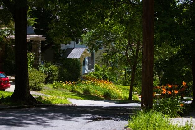 Flowers in a yard along Norfolk Road. July 11, 2015.