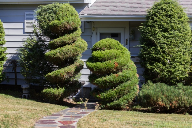 Topiaries flank the entrance of a Dickson Avenue residence. August 05, 2015.