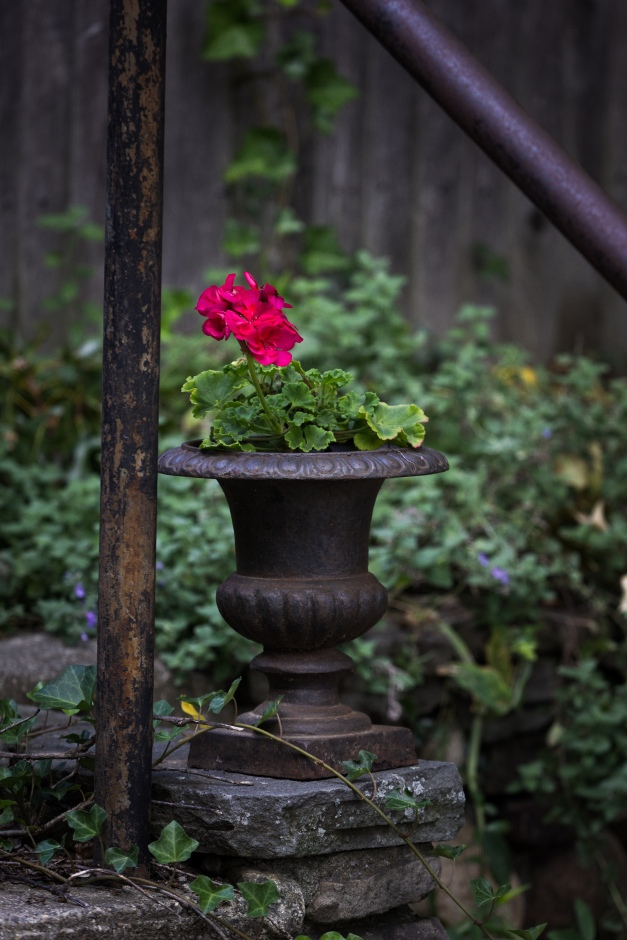 A flower in a planter along pond Lane. October 04, 2015.
