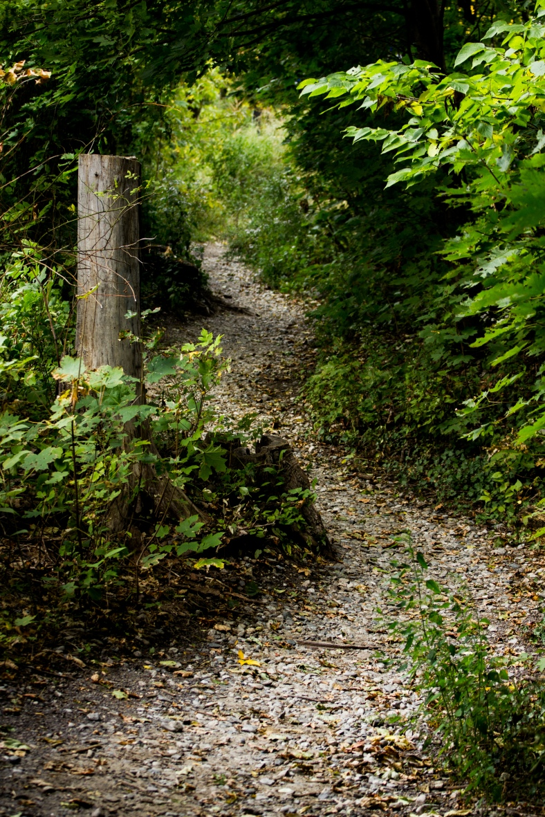 A gravel path that leads up onto the Minuteman Bikeway. October 04, 2015.