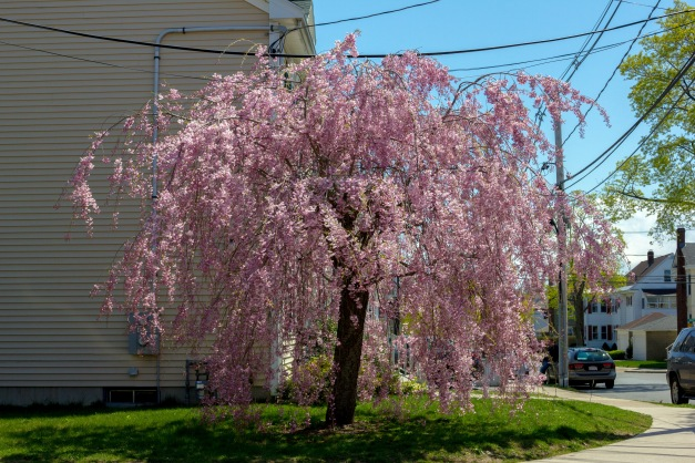 The colors of Spring along Lake Street. April 26, 2013.