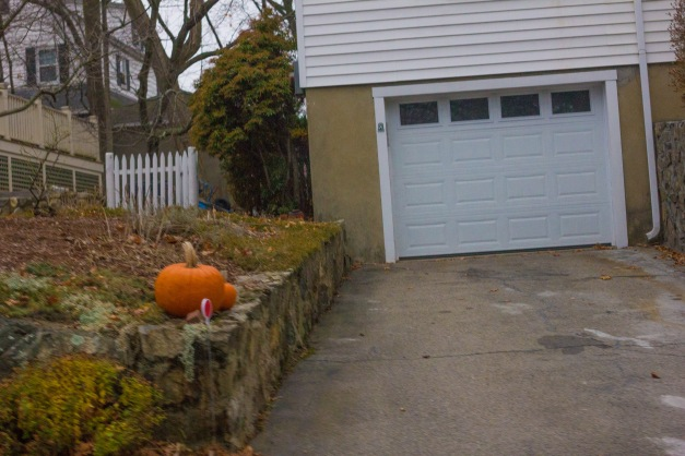 Pumpkins out, and still looking fresh, in front of  a Kensington Park home. December 14, 2015