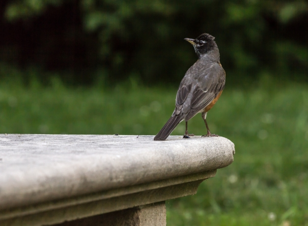 A bird enjoying a bench in the Town Hall garden. July 05, 2013.